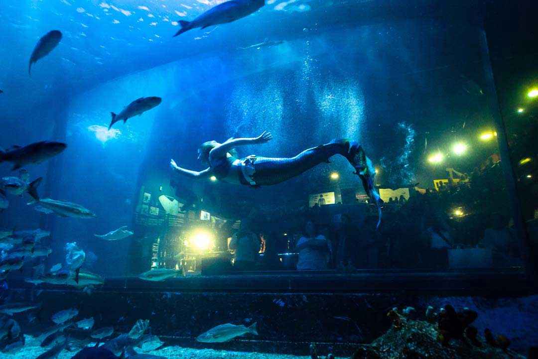 Mermaid-Grace-swims-past-window-plymouth-marine-aquarium-fins-and-gins