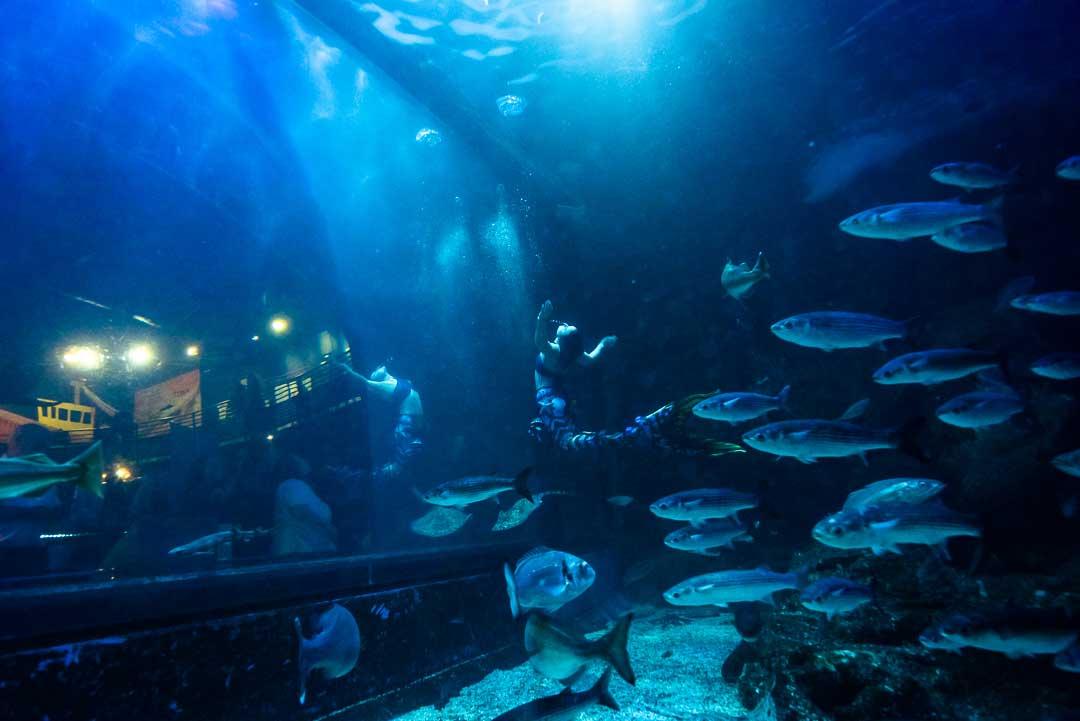 mermaids-plymouth-aquarium-fins-and-gins