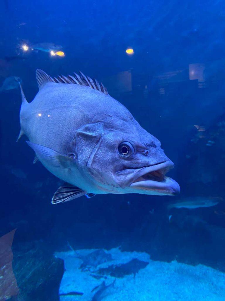 plymouth-aquarium-fish